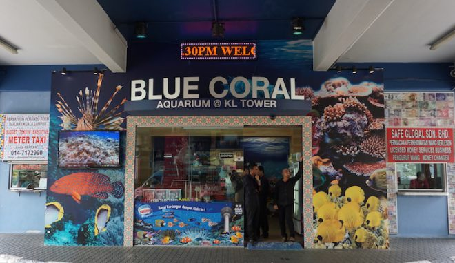 Narui My KL Tower Blue Coral
